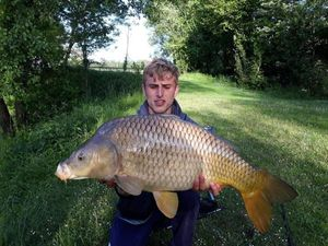 Common Carp — Téo Claude