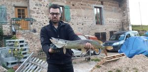 Northern Pike — Denis Brigat
