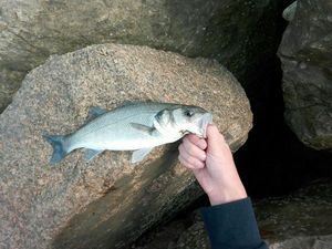 European Bass — Nicolas Travert