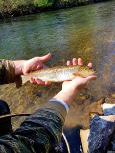 Brown Trout — Etienne Uhl