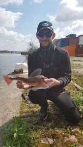 Grey Gurnard — Fishing For You Gaëtan