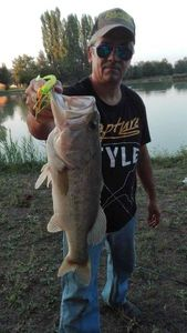 Largemouth Bass — Marco Iseppi