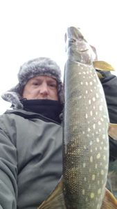 Northern Pike — Natura Carpe