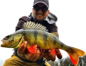 European Perch — Anthony Ls