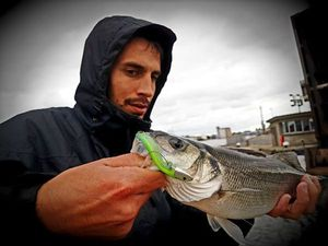 European Bass — Cédric Fishtique
