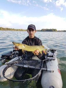 Northern Pike — Guigz Fishing