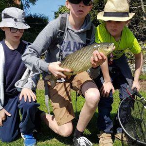 Chub — sylblue Fishing