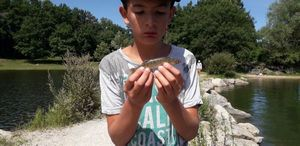 Zander — Lucas Fishing