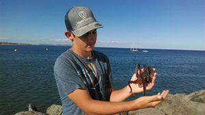 Common Octopus — Emilio Del Frate