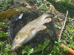 Barbel — Alex.Fishing. 79