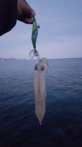 European Squid — Yann Fabre