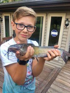 Sharptooth Catfish — Yaroslav Aubry