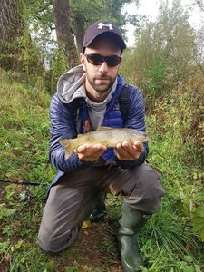 Brown Trout — Mathieu Golay
