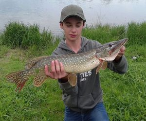 Northern Pike — Léandre Gus