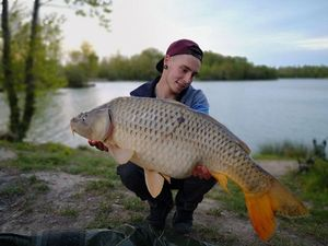 Common Carp — Joris Grand