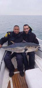 Southern Bluefin Tuna — Thomas Phinera