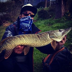 Northern Pike — Vincent Argand