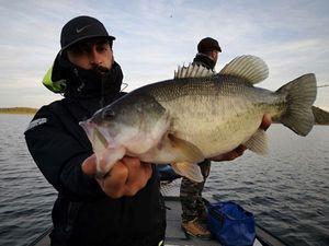 Largemouth Bass — Ben Sepol