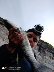 Thinlip Grey Mullet — TIM FISH (Youtube)