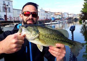 Largemouth Bass — Fabien Vallat