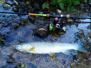 Brown Trout — Régis  Roullier