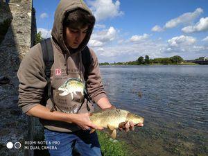 Common Carp — TIM FISH (Youtube)