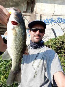 Largemouth Bass — Guillaume Martinez moniteur guide de pêche