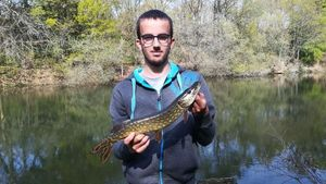 Northern Pike — Adrien Dollet