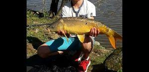 Mirror Carp — multifishing