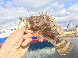 Brown Scorpionfish — Fishing Porquerolles