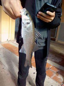 European Bass — Lucas Fishing