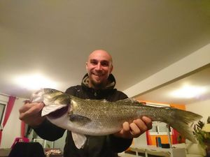 European Bass — Guivarch  Sébastien