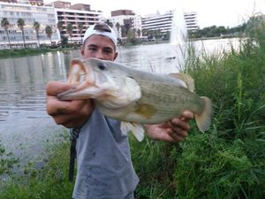 Largemouth Bass — Sachombass34 g