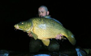 Common Carp — Didier Devillet