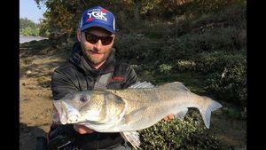 European Bass — Nicolas Cadiou