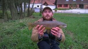Brown Trout — QUENTIN  Lamotte