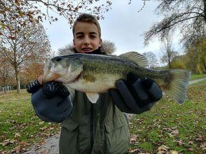 Largemouth Bass — armand delaunay