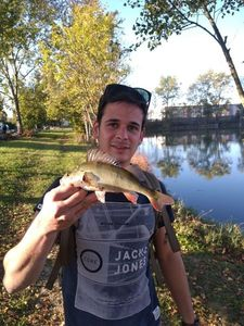 European Perch — Florent Naimud