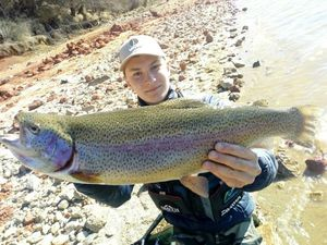 Rainbow Trout — Jules Mejean
