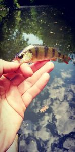 European Perch — Alexandre Angibaud