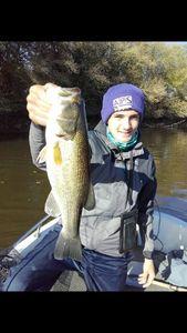Largemouth Bass — Antonin Cesbron