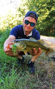 Largemouth Bass — Karl Ecotiere