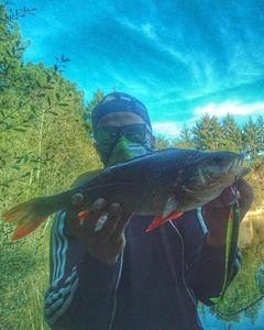Perche Commune — Douving Fishing