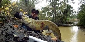 Wels — Myk Fishingddict