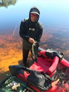 Largemouth Bass — Alexandre Turrel