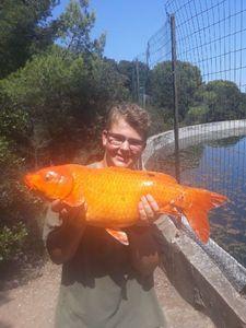 Koï Fish — Guillaume Lo Pinto