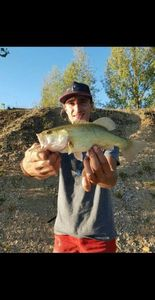Largemouth Bass — Todd Perré