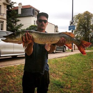 Northern Pike — Pierre Yves