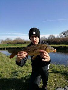 Common Carp — Fish Andfun