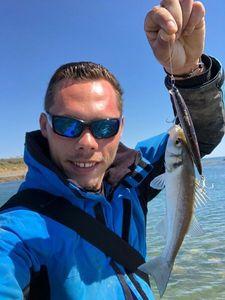 European Bass — barloup fishing